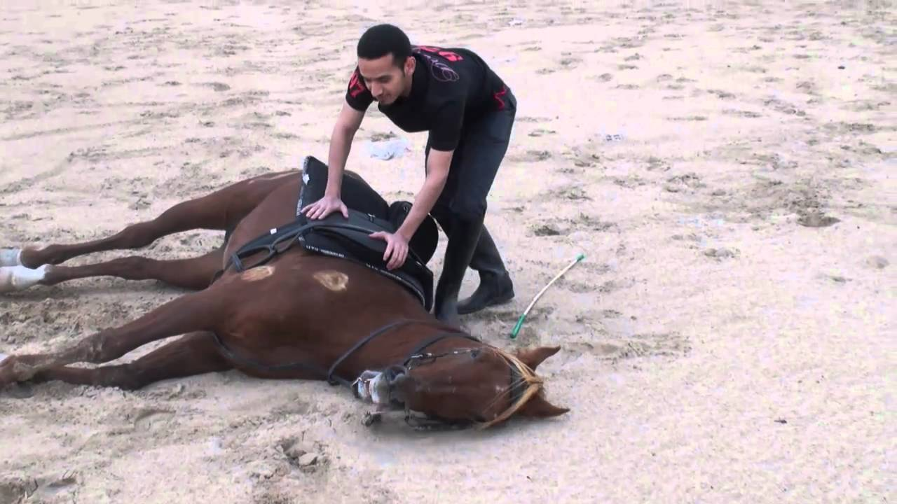 الخيل العربي - مالك الهزاع- طلعة الخيل الجديده - 10-3-2011