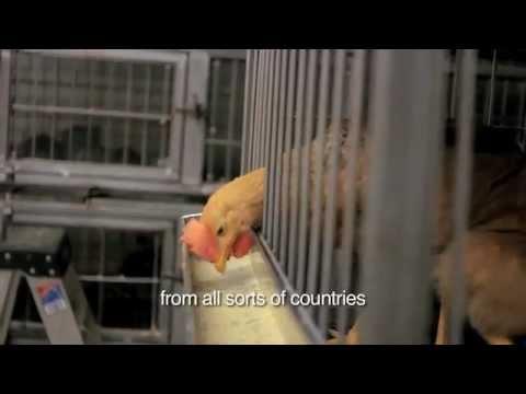 Vivero Live Poultry Market Youtube