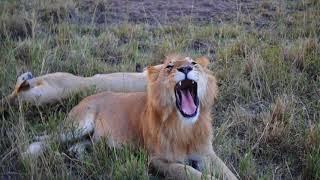 Masai Mara, Kenya - Safari 2017 - The Cheesbrough Family
