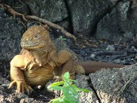 Conserving the Last Eden: Research Experiences in the Galapagos Islands