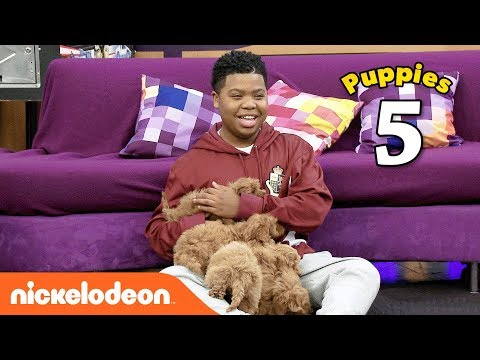 The Cute Puppy Challenge 🐶 w/ Benjamin Flores Jr. (AKA Luckiest Kid Ever) | Game Shakers | Nick
