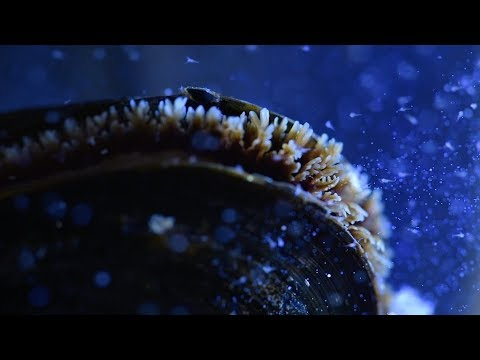 Mussels and Microplastics | Ocean Up Close | Ocean Wise