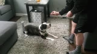 Dipper tricks