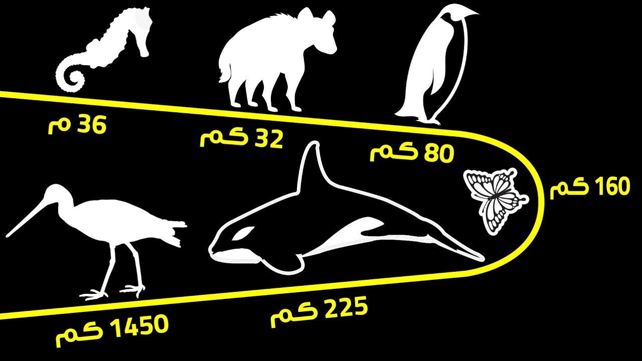 المسافات التي تقطعها الحيوانات في اليوم الواحد (قد يتجاوز بعضها 800 كلم)
