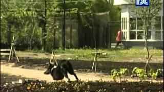Бездомные собаки разрушили цветник возле СК «Вологда»
