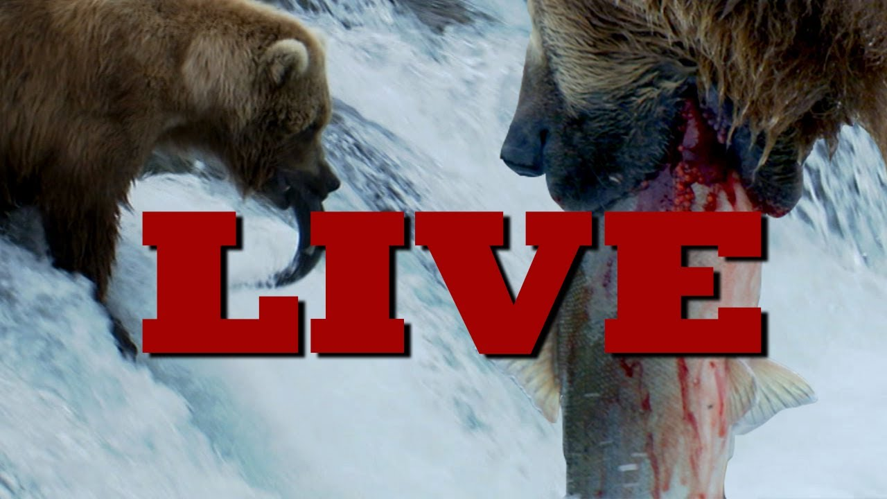 Earth Juice LIVE REPLAY w/ Grizzly Bears in Alaska - Earth Unplugged