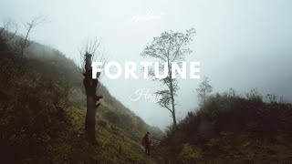 Hazy - Fortune