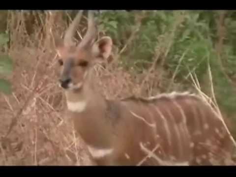 2012-- animals of Mole Park, Ghana