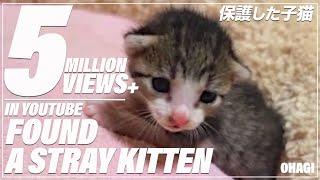 保護した子猫 - Found a stray kitten - thumbnail
