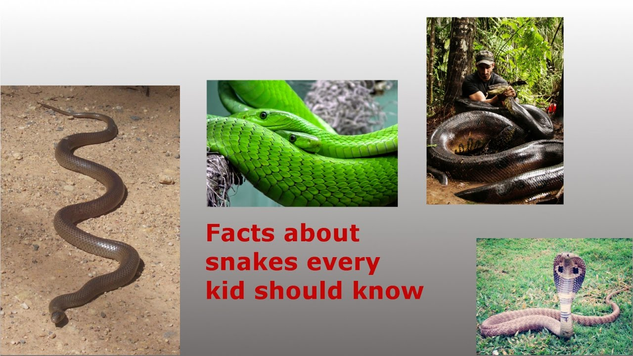 Amazing Facts About Snakes For Kids - YouTube