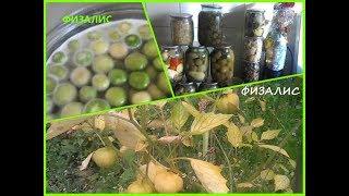 Физалис. Урожай и вкусные заготовки.
