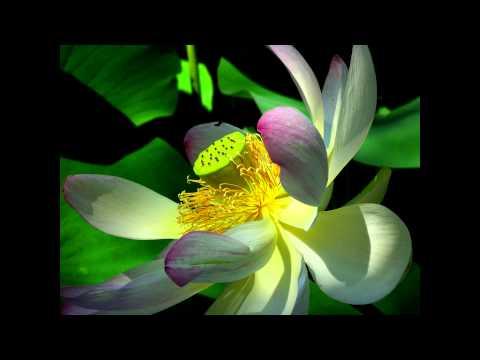 Plantas acu ticas emergidas para estanque decoraci n ox for Como oxigenar el agua de un estanque sin electricidad