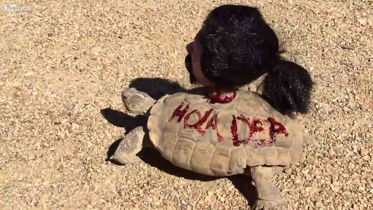& My tortoises Halloween costume - YouTube