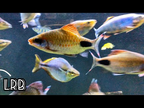 DIY Aquarium Fish Spawning Trap For Egg Scattering Fish