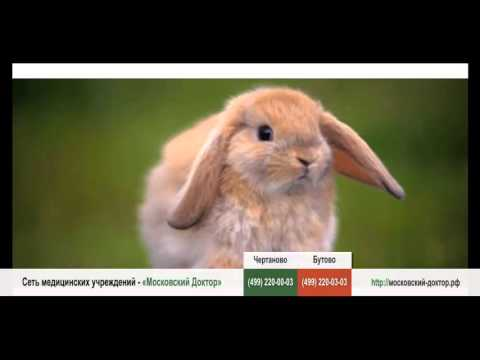Аллергия на кроликов