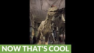 Super realistic velociraptor tries its best to scare everyone