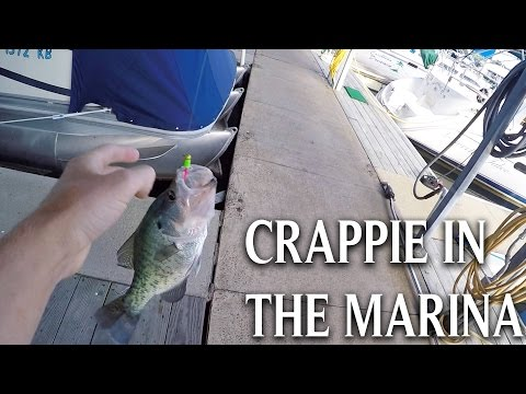 Quick Trip To The Marina: Crappie Fishing
