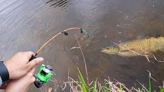 MICRO ROD CATCHES GOLDEN CANAL WHALE!