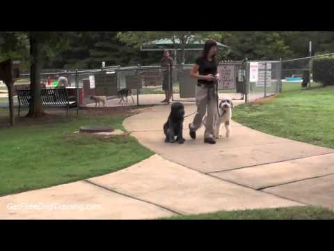 Dog Training Techniques - 6 tips for mastering the dog walk