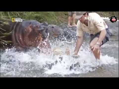 World's Deadliest Animal - Awful Attack of Animals on People
