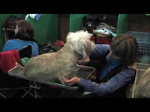 Dandie Dinmont Terriers at Crufts 2010 - On the Benches