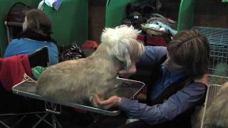 Dandie Dinmont Terriers at Crufts 2010  On the Benches