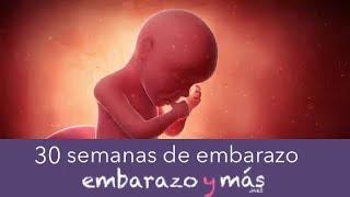 76695d068 30 semanas de embarazo - Séptimo mes - EMBARAZOYMAS ...