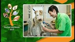 PARHAAT KÄYTÄNNÖT 2010: Eläinten koulutushallin rakentaminen