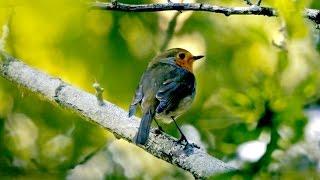 ptice-naih-uma