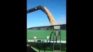 Rice harvest 2014 katy texas