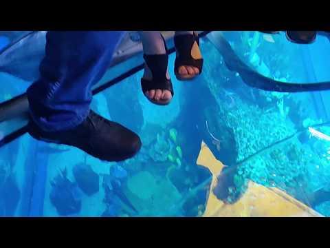 Dubai Aquarium & Underwater Zoo – SAVE SHARKS
