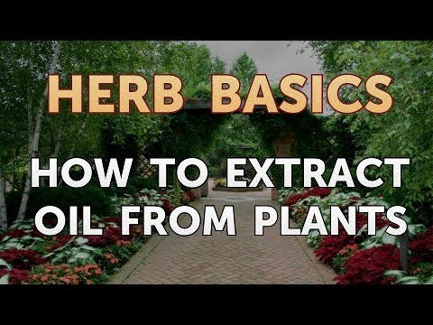 How to Extract Oil From Plants