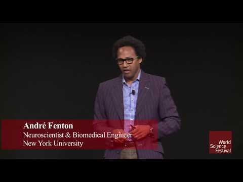 Cool Jobs:Andre Fenton