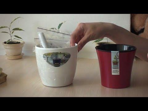 Как не поливать цветы три месяца: умный вазон своими руками