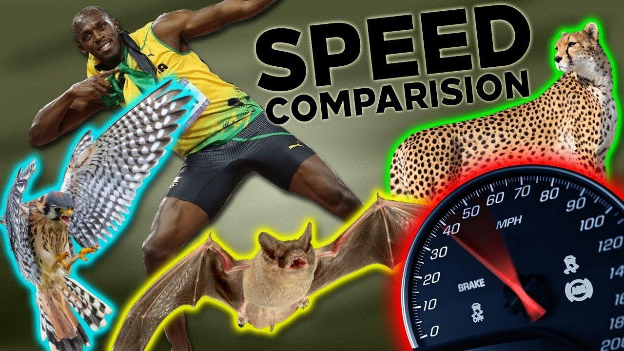 Fastest Animals Ever   Mammals Fish Birds Usain Bolt Speed ...