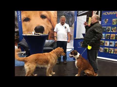 Die HZD auf der World Dog Show 2017 in Leipzig