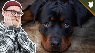 NEVER LET YOUR ROTTWEILER EAT THIS!!!!