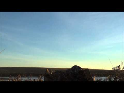 Saskatchewan prairie pothole Mallard hunt with Pacific Wings Prairie Outfitters
