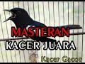Masteran Kacer Juara Suara Burung Kacer Gacor  Mp3 - Mp4 Download