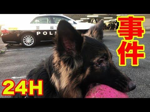 警察犬24H・事件だマック!追え・逃げろ!シェパード犬