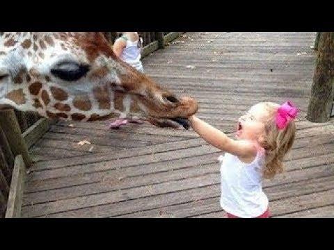 Lustige Kinder im ZOO - VERSUCHEN NICHT ZU LACHEN - YouTube