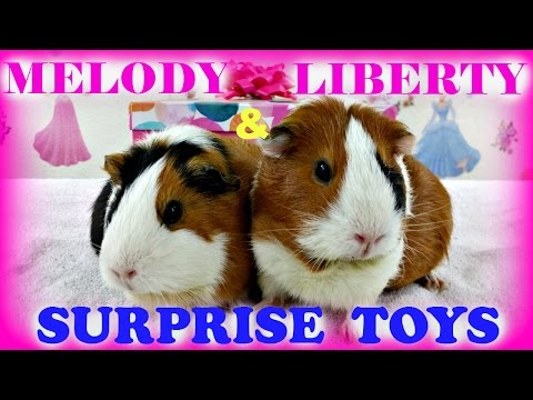 SURPRISE TOYS - Shopkins My Little Pony Sofia the First and GUINEA PIGS