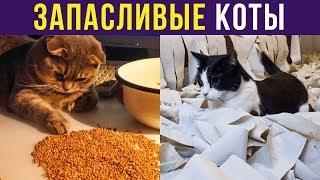 Приколы с котами. Запасливые коты | Мемозг #234