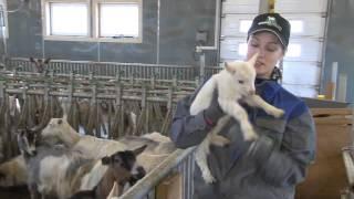 Малые семейные молочные и мясные фермы. Норвегия