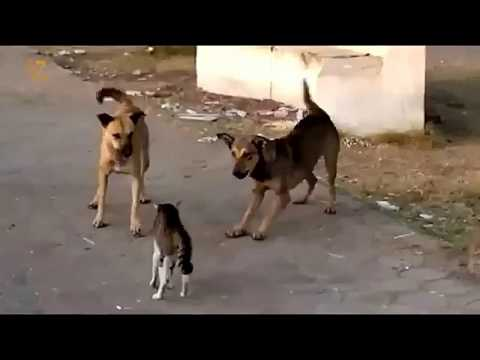 A Cat Vs  Some Doge Fight  But  Dog are failed || Cats vs Dogs: The Ultimate Fight Battle