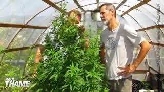 Primeira vez que Eduardo Jorge viu um pé de cannabis