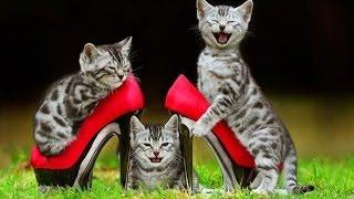 Животная месть! Коты страшные мстители!