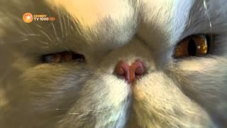 Кошки против собак - промо трейлер фильма на TV1000 Comedy HD