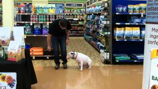 Elvis Training In Pet Smart
