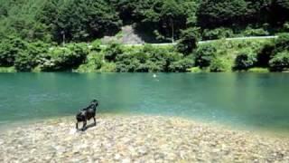 ダム湖で泳いできました。